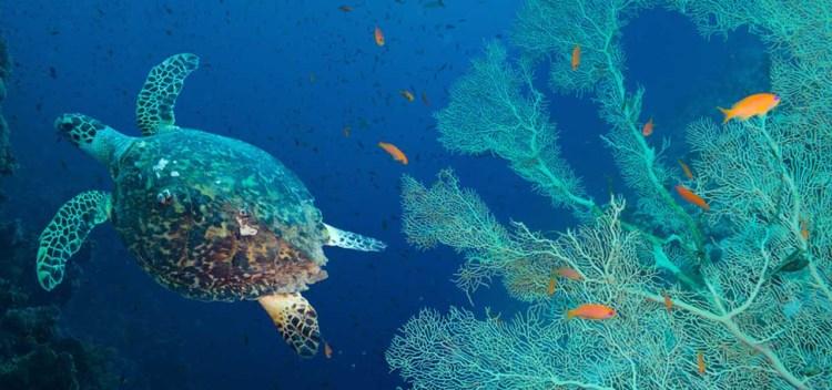 Centro Recupero Tartarughe Marine la costa dei gelsomini la locride lalocride