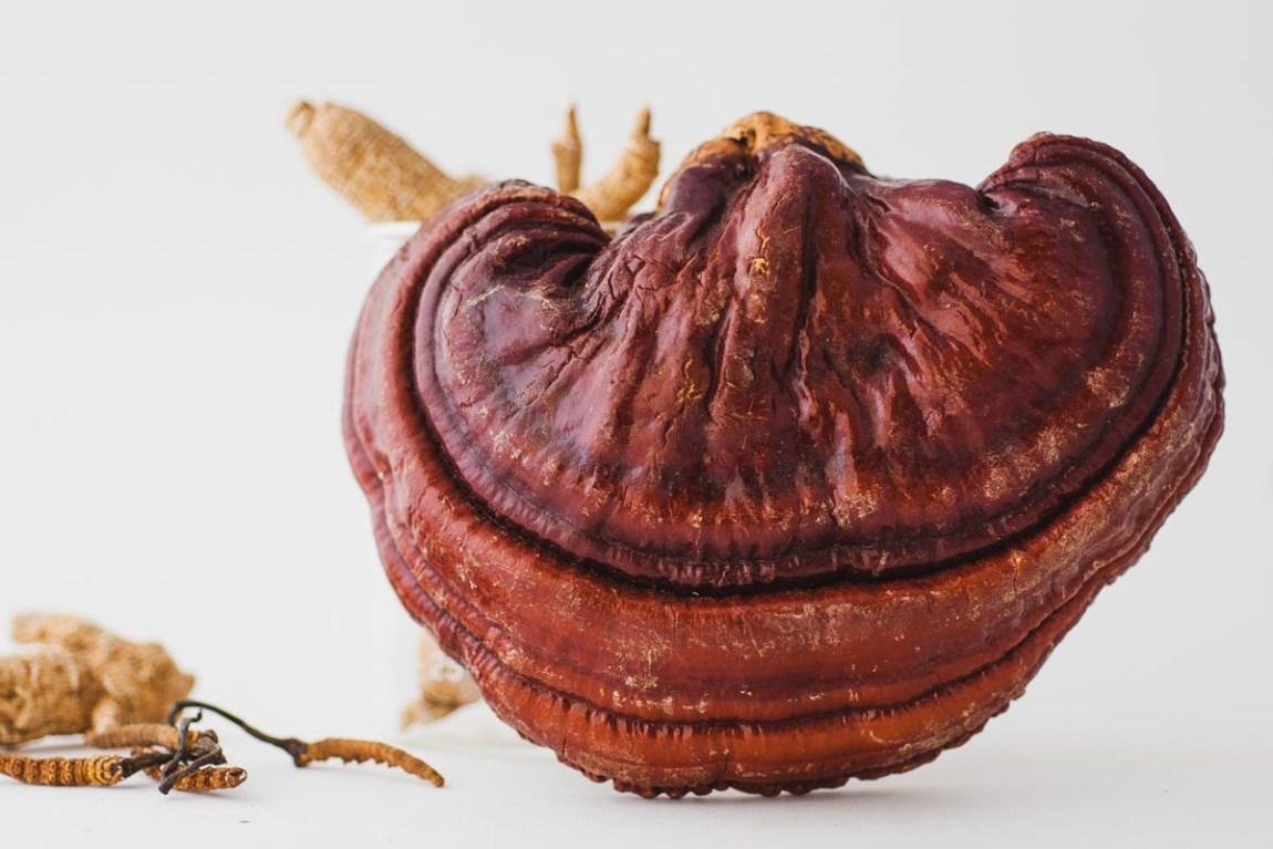 reishi mushroom benefits for skin