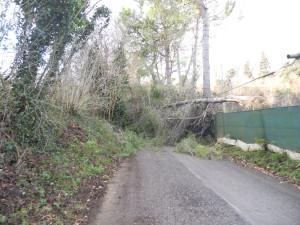 Falconara, una task force per fronteggiare l'emergenza vento