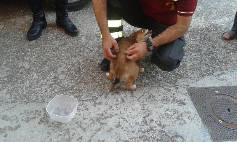 Salvato un cane abbandonato in un garage