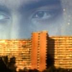 """SENIGALLIA / Per il Cinema d'autore, martedì al Gabbiano c'è """"Homeward Bound"""""""