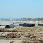 SENIGALLIA / Il salasso della Tari, ma davvero il legno spiaggiato è un rifiuto?