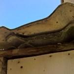SENIGALLIA / Amianto deteriorato anche in via Baroccio, scatta l'allarme