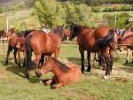 Cantiano si sta preparando per la mostra mercato dei cavalli
