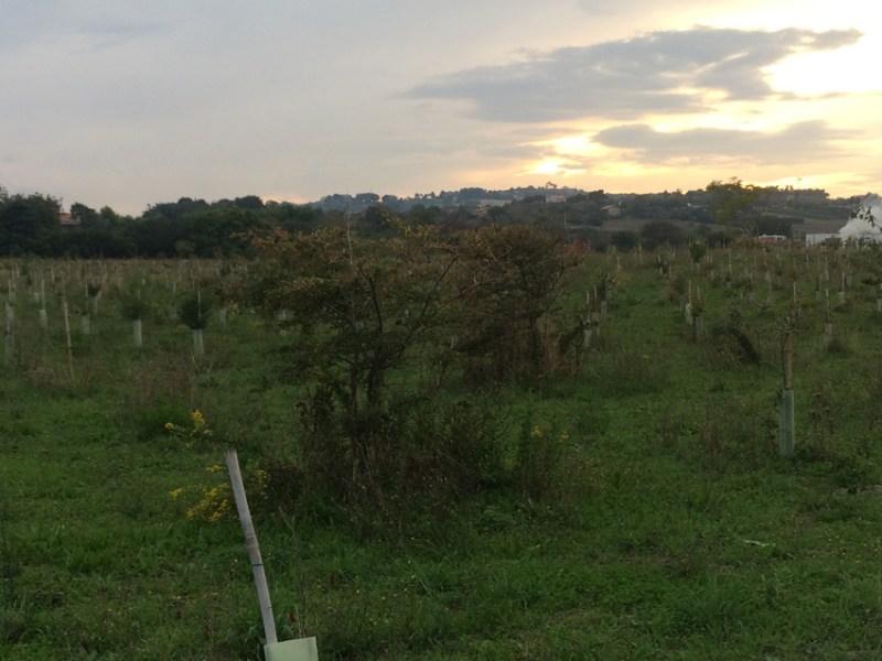 Il verde a Senigallia: ecco come si presentano i parchi urbani della Cesanella e delle Saline