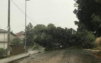 MONSANO maltempo albero caduto strada2019-07-09