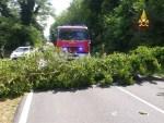Alberi e rami caduti per il maltempo hanno bloccato alcune strade