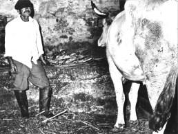 Peppe Ranieri 1985 fotografato da Mario Giacomelli 4