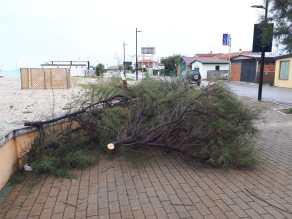 MARZOCCA lungomare alberi tagliati o in pericolo2019-10-06 (8)