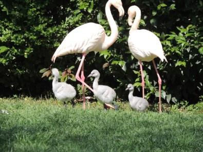 FALCONARA parco zoo Fenicotteri2020-04-29 (1)