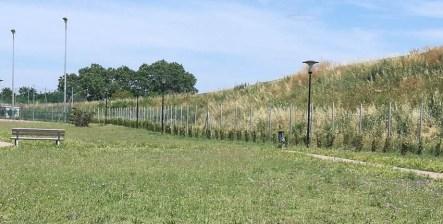 FANO riforestazione2020-06-16 (2)