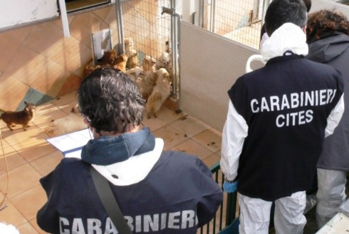 TRECASTELLI allevamento cani sequestro carabinieri forestale2021-01-19 (4)