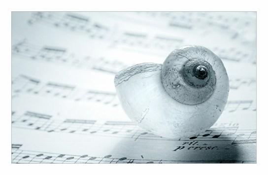 immagine musiche del mare