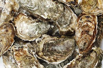 Soirée huîtres - Session Irlandaise - Vendredi 16 mars 2016