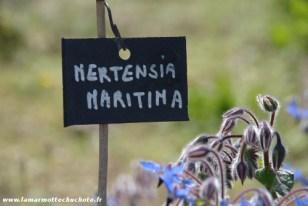 mertensia_etiquette
