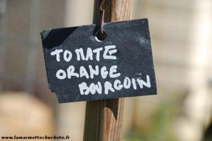 tomate_orange