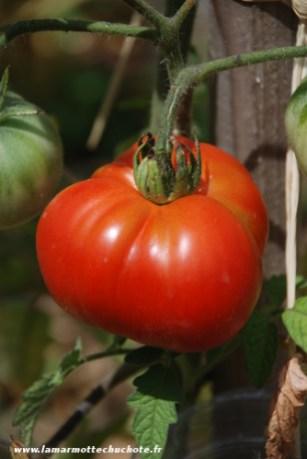 tomate_fruit