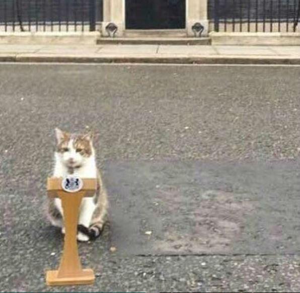 El influyente gato es reconocido en todo el Reino Unido (Foto: Twitter @Number10cat)