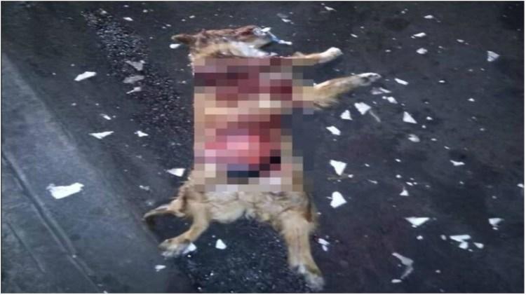 Parte del cuerpo del perro quedo destrozada (Foto: Facebook Mundo Patitas)