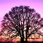 dono-albero-sorriso.jpg