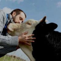 Perché mangiamo gli animali?