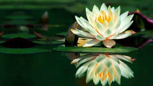 mente-meditazione-pensieri-positivi-costruttivi.jpg