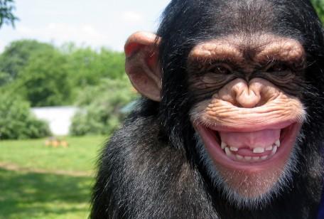 mente-meditazione-scimmia-impazzita.jpg?