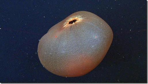 placenta de ballena
