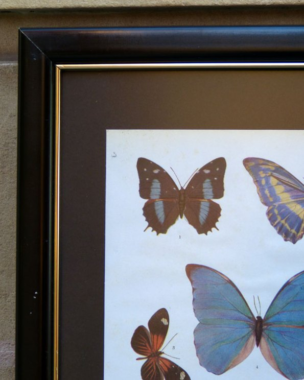 Ilustraciones enciclopédicas de Mariposas y Escarabajos