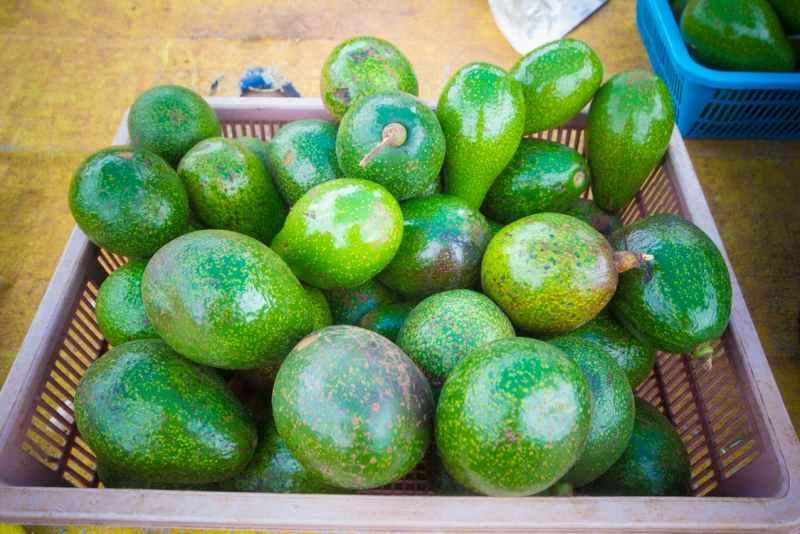 Benefici avocado, bacca antica che fa bene e allunga la vita