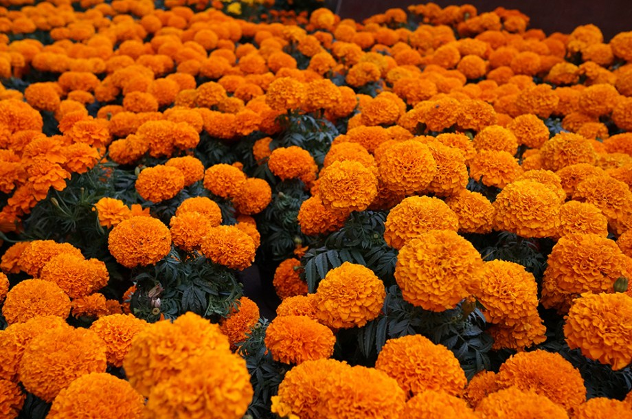 flor-de-Cempasúchitl-dia-de-muertos-mexico