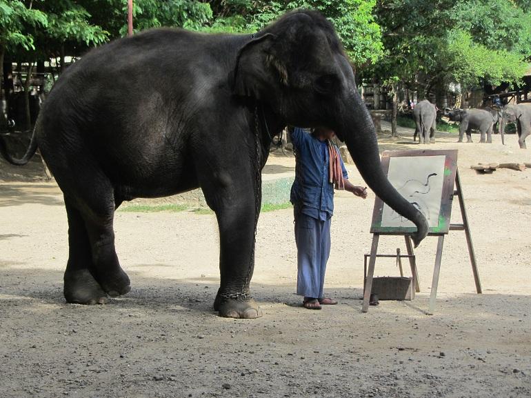 elefante-encadenado-turismo-responsable