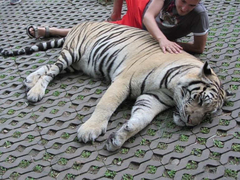 tigre-turismo-responsable