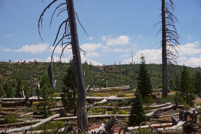 Zona devastada por un incendio en Mammoth Lakes