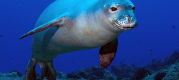 foca monaca a Lampedusa
