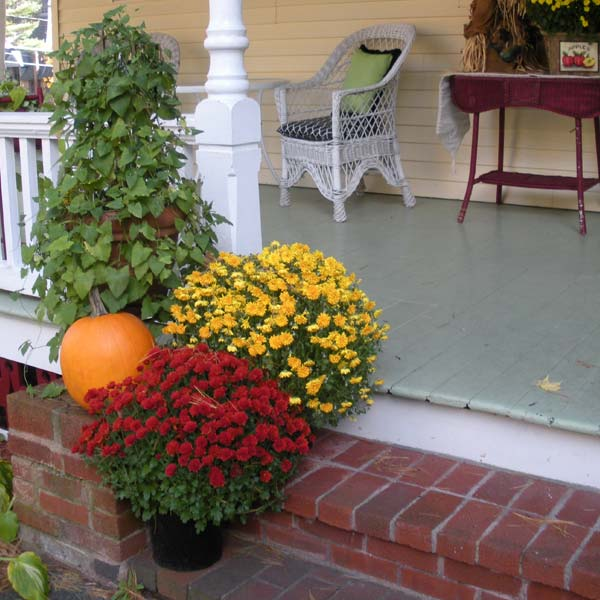 Fall mums on porch steps at Lamplight Inn Bed & Breakfast near Saratoga Springs