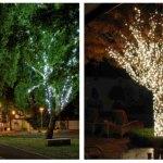 Lampu Hias Pohon Untuk Mempercantik Pohon Di Depan Rumah