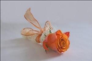 Rose-300×199