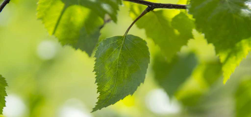 prevent pest and disease on trees