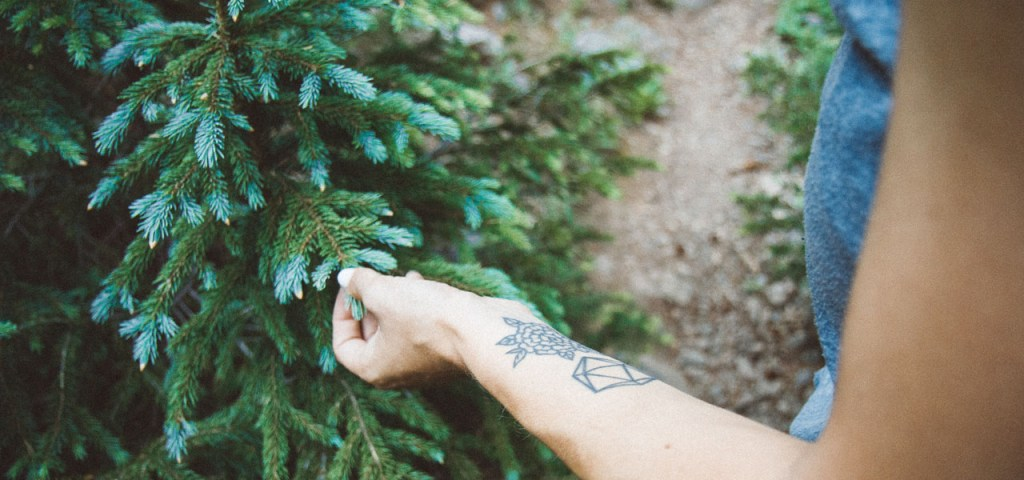 Close up of a woman's hand touching an evergreen tree in Colorado
