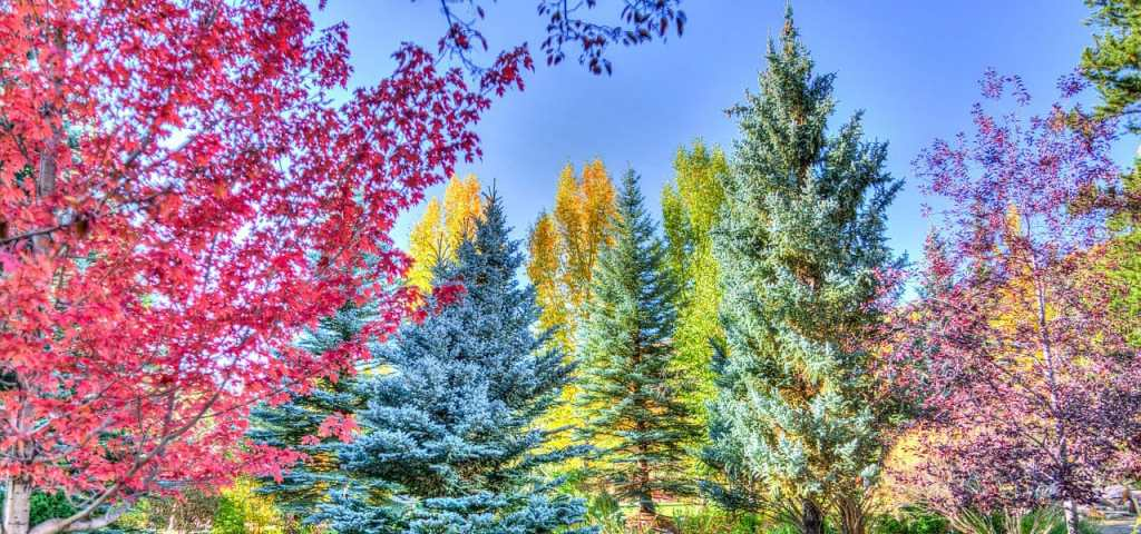a variety of colors of fall trees in Colorado