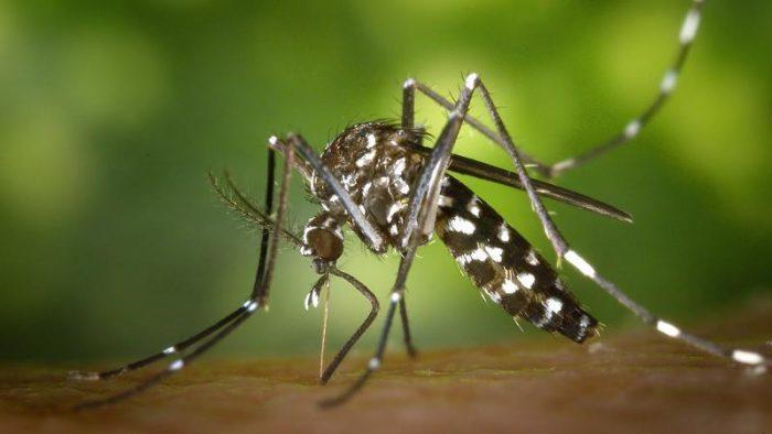 Huila en alerta máxima por aumento en casos de dengue 1 16 febrero, 2020