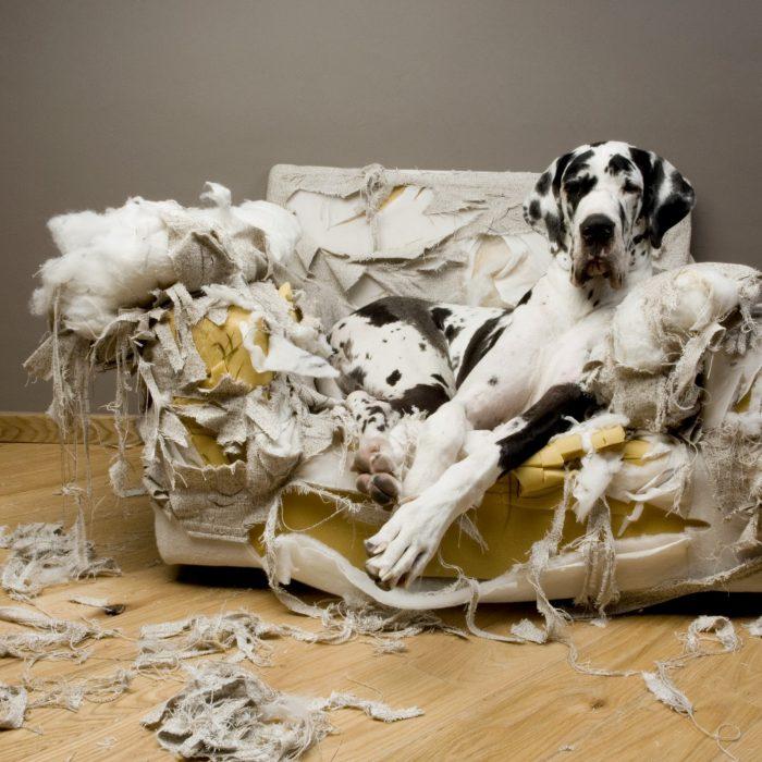 Controle la hiperactividad canina 1 16 febrero, 2020