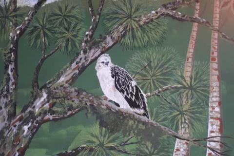 El mural que expone la fauna silvestre del Huila 2 27 mayo, 2020