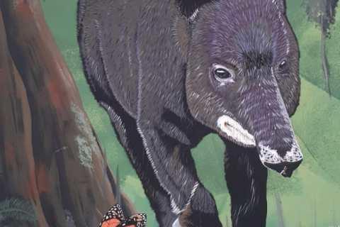 El mural que expone la fauna silvestre del Huila 3 27 mayo, 2020