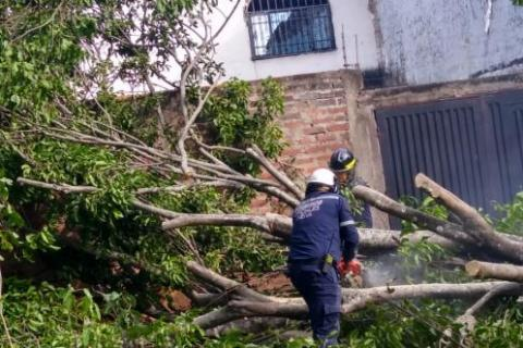 Masiva caída de árboles por fuertes vientos en Neiva 5 27 mayo, 2020