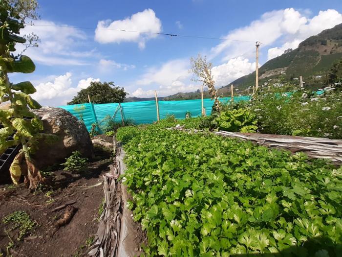 Municipio del sur del Huila le apuesta a las huertas caseras 2 10 agosto, 2020