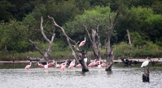 El departamento de Boquerón es también un paraíso para observación de aves. Foto: Gentileza.