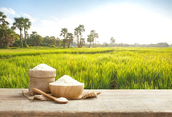 En Paraguay se siembran unas 165.000 hectáreas de arroz al año.