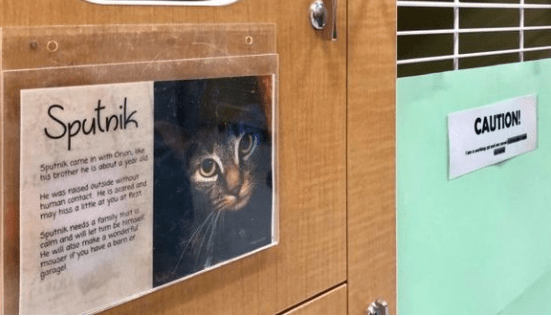 Maine shelter finds perfect job for unemployed cats